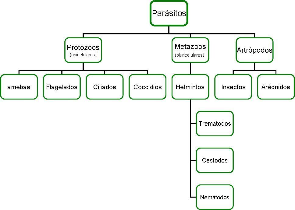 Como salen del organismo de la persona los parásitos