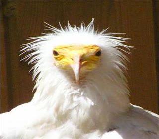 http://3.bp.blogspot.com/_-zOrAL1V5Jg/SfA7bZ7fXNI/AAAAAAAAB3Q/OTOhk9LnP1c/s320/vulture.jpg