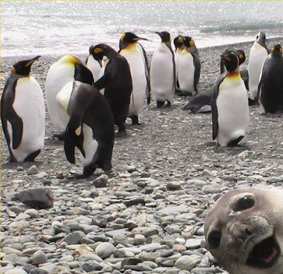 animal photobomb freaking news