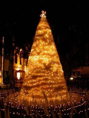 華山藝文中心的羽毛耶誕樹