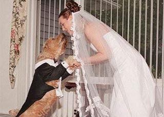 Menikah Dengan Anjing