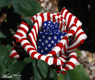 Yankee Rose Fourth of July via Worth 1000.com