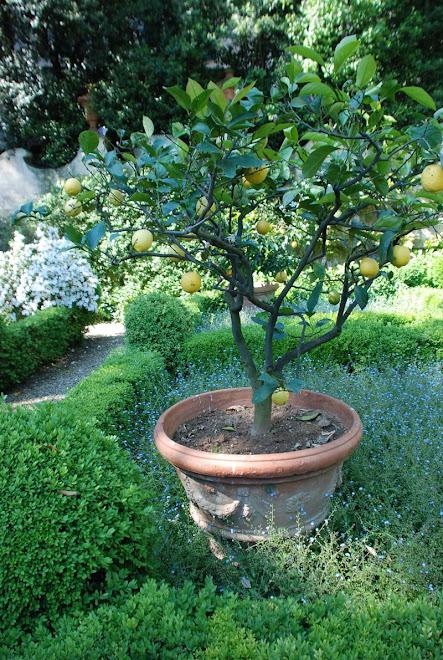 """Min """"favoritträdgård""""  i Toscana! COPYRIGHT på alla foton i min blogg!"""