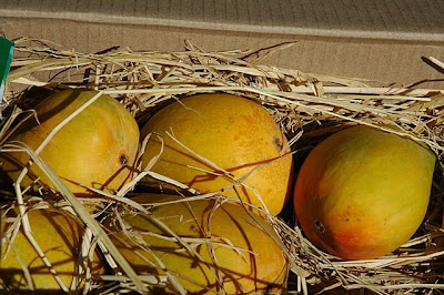 Alphonso mangoes surrounded by straw