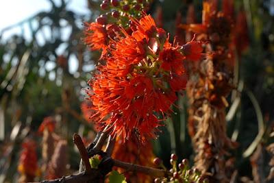 Balboa Park, The Desert Garden