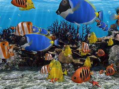 Screensavers on Do You Like Fish Screensavers Yeah Colorful Aquarium Images Are Very