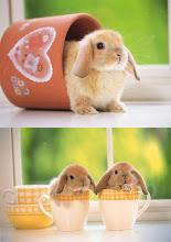 the bunny rabbit