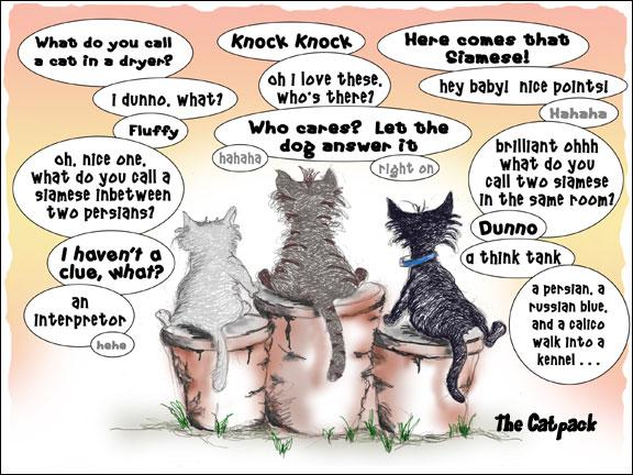 cats telling jokes