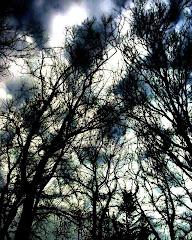 contacto con la naturaleza es estar en contacto con dios