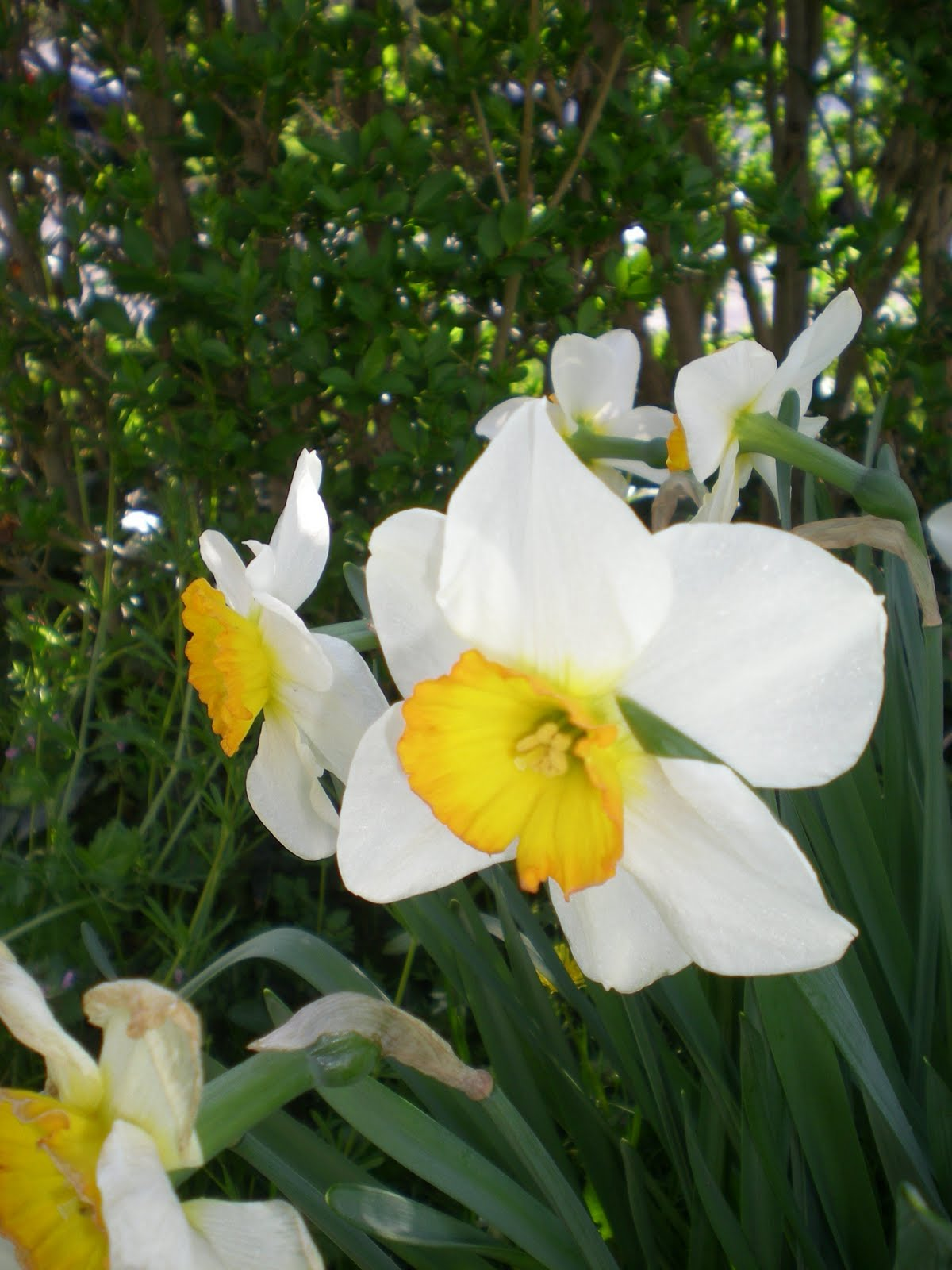 Contemporary White With Yellow Center Flower Component Best