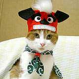 SHISHIMAI CAT