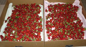 [StrawberriesEdited2.jpg]