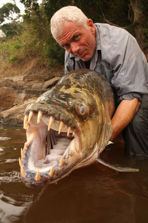 Jeremy Wade (of River Monsters) holds his prise Tiger Fish on the shores of