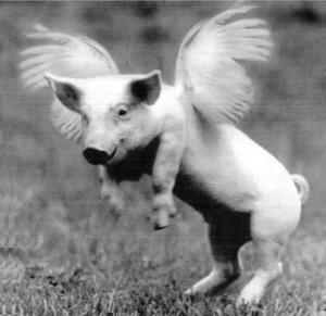 flying_pig.jpg