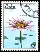 Flores acuáticas: nymphaea coerulea