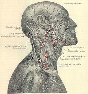 Enlarged Posterior Auricular Lymph Node http://rellimfamily.blogspot.com/2009/10/lymph-node.html