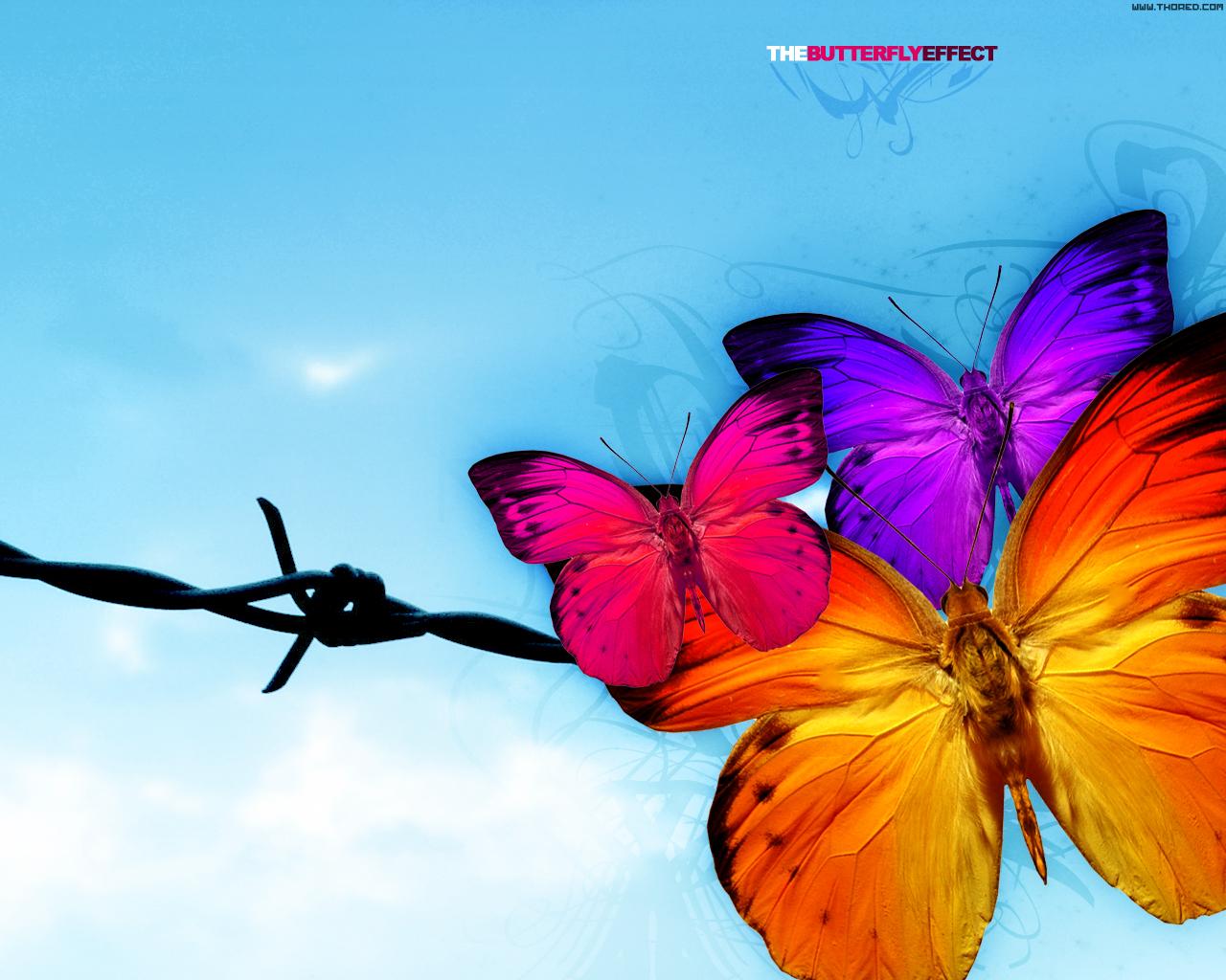 Butterflies in my