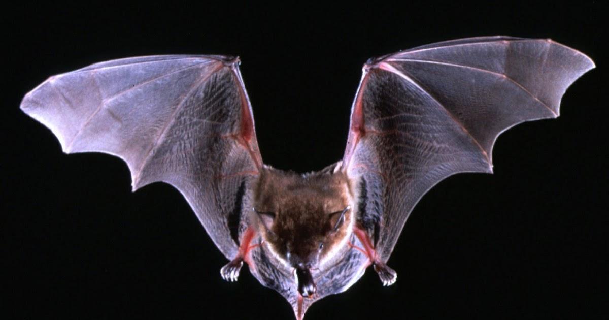 midnight in the garden of evil flight of a million bats