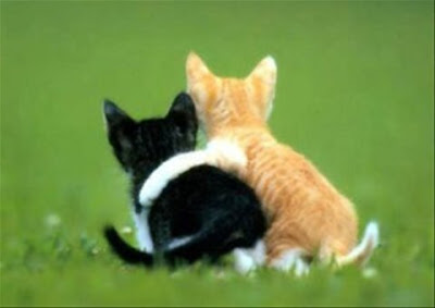amizade gatinhos