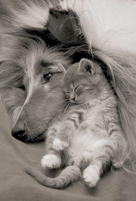 cães gatos cachorros dormindo