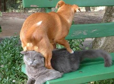 cães gatos cachorros folgado