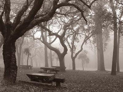 solidão árvores secas