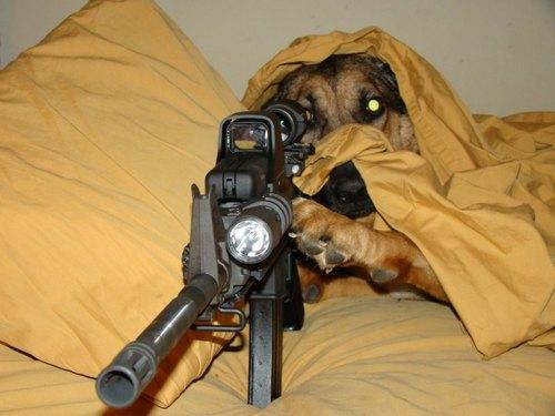 cachorro sniper mira headshot