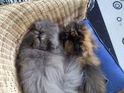 Mer info om mina katter?