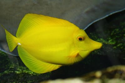 صور لاجمل واندر الاسماك
