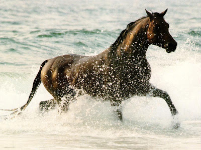 fantastic wallpaper. Fantastic wallpapers of Horses
