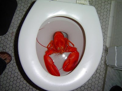 Eat A Dick, Joel: The Blog: Lobsterfest® Lobsters On Through The Lobster!