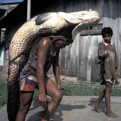 ada2aje: Cara bawa ikan besar