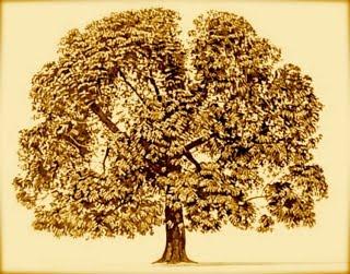 Champaca Tree