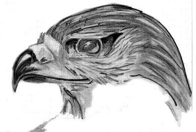 Animales dibujados en lapiz