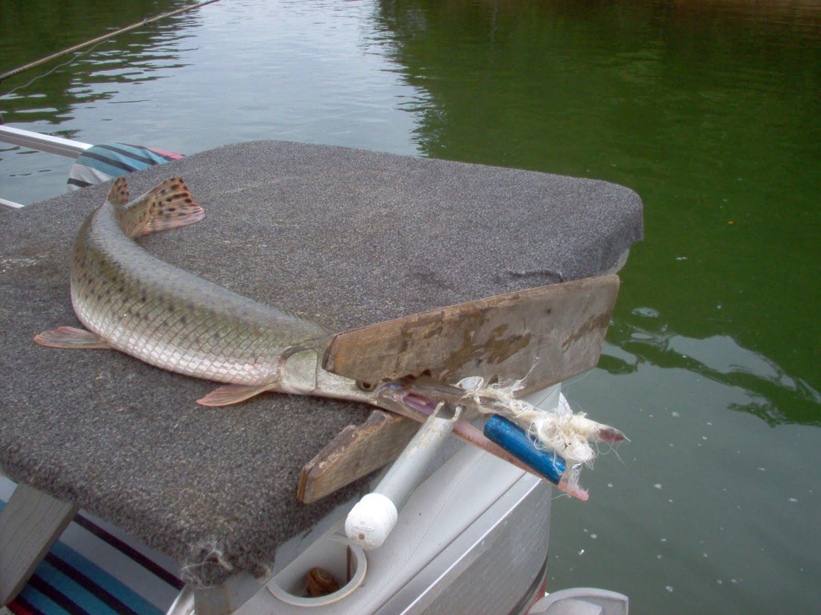 Lake lanier gar fishing for Gar fishing lures