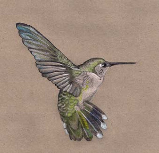 OldSchoolTweets Kolibri Hummingbird