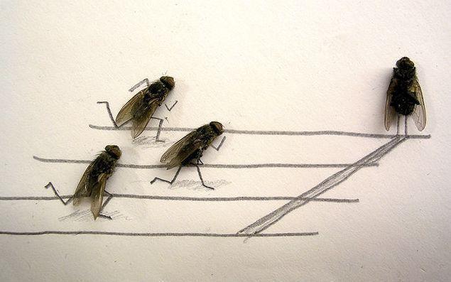 [mosca.aspx]