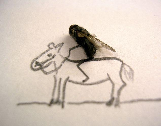 [mosca3.aspx]