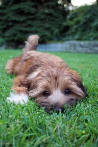 What Flea Collars Work Best For Dogs