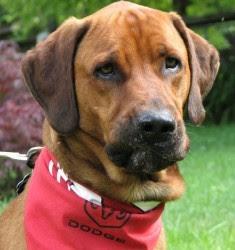 Sasktoon Dog Rescue