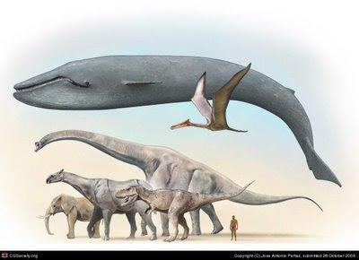 El animal más grande del mundo es un gusano marino