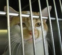 5/3/10 Cats Deperate for Homes Licking Cty Pound OH