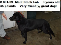 "1/31/10 ""The Muskingum Co Pound in Zanesville, OH has MANY black labs and mixes available!"""