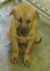 3/19/10  Bo  4 month old in High Kill  River Valley Shelter CA. 100.00 Donation to Get Him  Out!