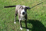 12/21/09  IIlinois Dogs Will be Dead If  No Adopters or Rescues