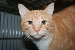 "7/21/10 ""Aturo has been at the shelter longer then any cat should have to stay in a cage. This boy"