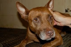 8/2/10 Prisoner on work detail at shelter hid dog so she wouldn't be put on euth list.  Please Read