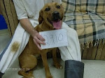 12/3/10 Yellow Lab  Had Rescue and Adopter. She was euthed at Floyd Cty Pound. People are OUTRAGED!