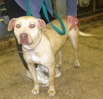 12/4/10 This dog's life can be saved for $17.00 Out of state rescues and adopters welcome. OH