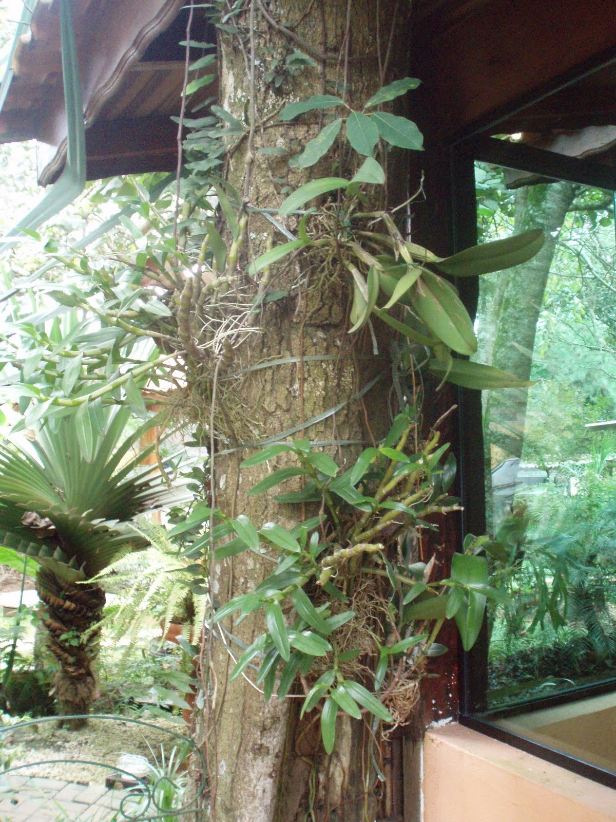 de vidro que possibilita contemplar a paisagem desse jardim tropical